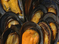 Omułki z grilla a la Cape Malay