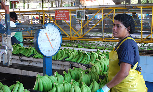 Wojny bananowe