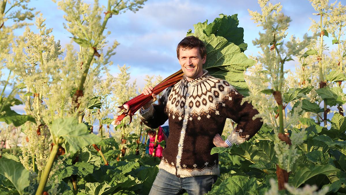 Na islandzkiej farmie