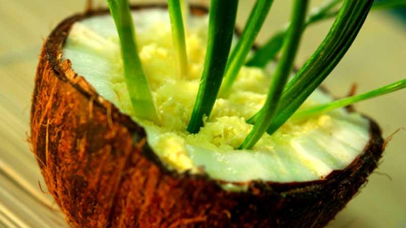 Sorbet ananasowo-kokosowy