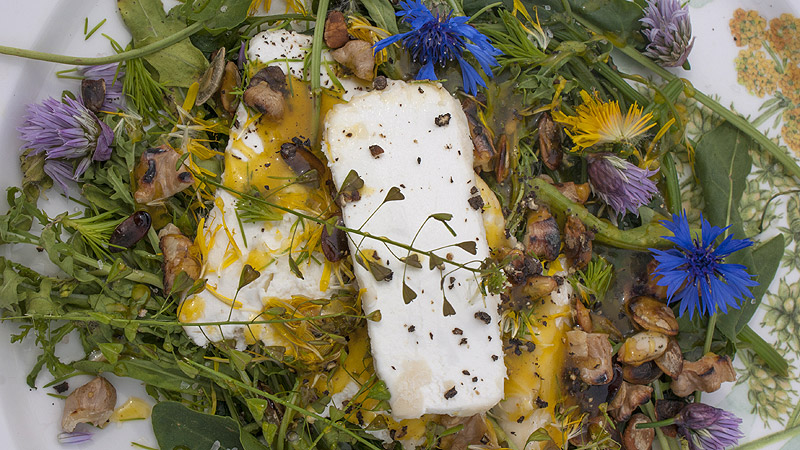 Łąkowe ziółka z kozim serem
